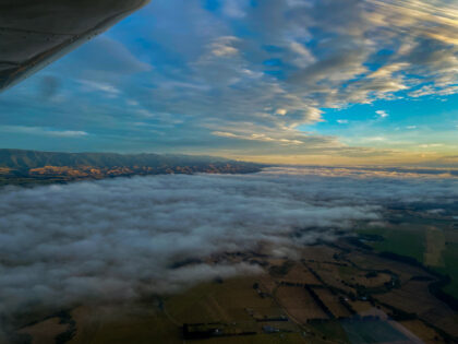 Left Wing View TRD
